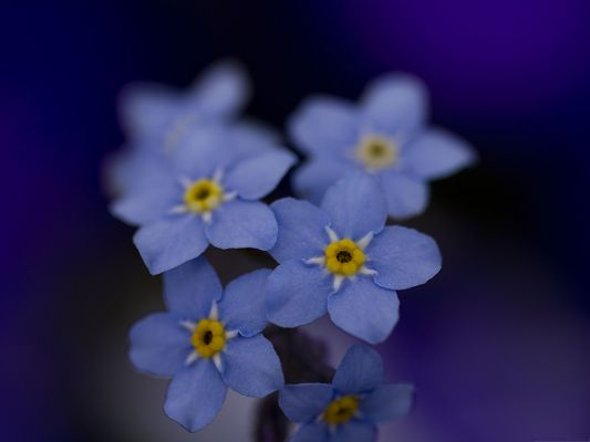 click to free download the wallpaper--Free Wallpaper Backgrounds, Blue Tiny Flowers, Dreamy Landscape