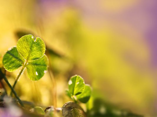 click to free download the wallpaper--Free Wallpaper Backgrounds, Clover Leaf Bokeh Under Purple Setting, Incredible Landscape