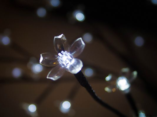 click to free download the wallpaper--Free Wallpaper Backgrounds, Crystal Clear Flower, the Night Star