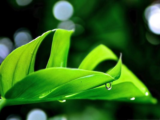 Free Wallpaper Backgrounds, Droplet On Green Leaf, Feel Fresh and Clean
