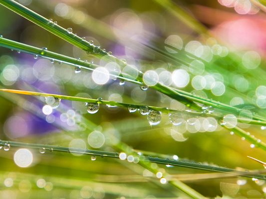 Free Wallpaper Backgrounds, Grass Dew Bokeh, Shinning Waterdrops