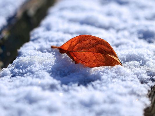 click to free download the wallpaper--Free Wallpaper Backgrounds, Red Leaf On Snow, Gains First Attention in the Pure World