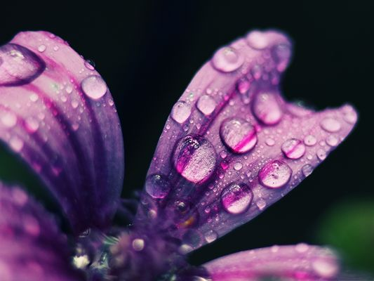click to free download the wallpaper--Free Wallpaper Backgrounds, Spring Rain Drops, Gaining New Life
