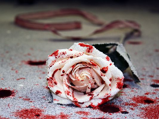 click to free download the wallpaper--Free Wallpaper Backgrounds, Tainted Rose, Is Blood Over It?