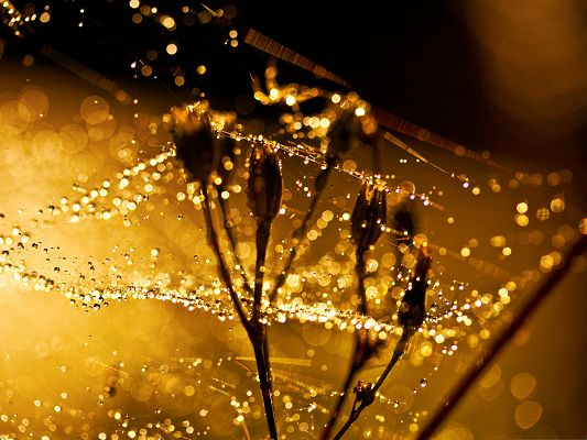 click to free download the wallpaper--Free Wallpaper Backgrounds, Wet Spider Web Under Macro Focus
