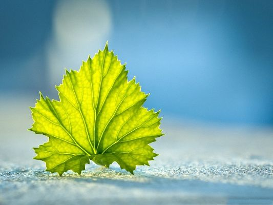 click to free download the wallpaper--Free Wallpaper Backgrounds, a Green Leaf Standing On the Ground