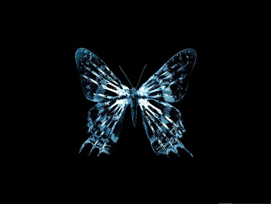 click to free download the wallpaper--Free Wallpaper for Computer, Butterfly X Ray on Dark Background