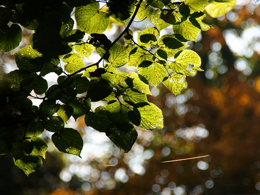 Free Wallpaper for Computer Desktop, Sunlight on Green Leaves, Nice-Looking and Fit