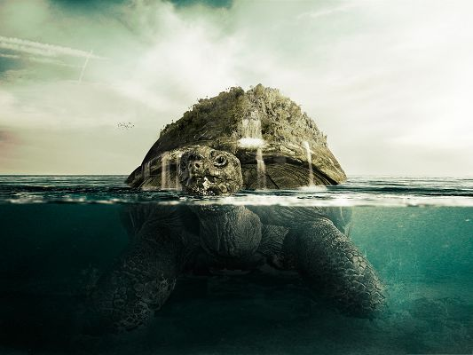 Free Wallpaper for Computer, Giant Turtle, Can You Believe Your Eyes?
