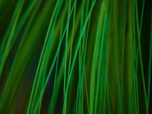 click to free download the wallpaper--Free Wallpapers and Backgrounds, Longleaf Pine Needles, Amazing Landscape