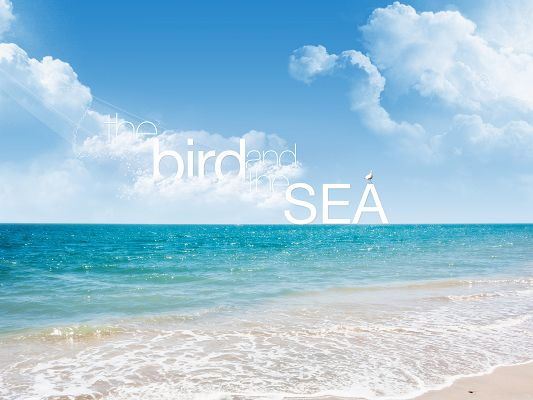 Free Wallpapers and Backgrounds, the Bird and the Sea, Shinning and Seemingly Endless