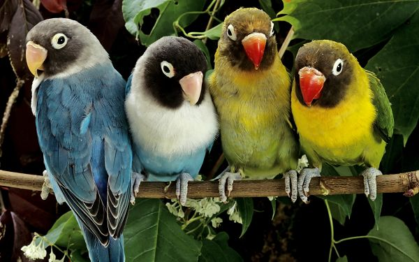 Free Scenery Wallpaper - Includes 4 Love Birds, Makes One Feel Loved and Cared for!