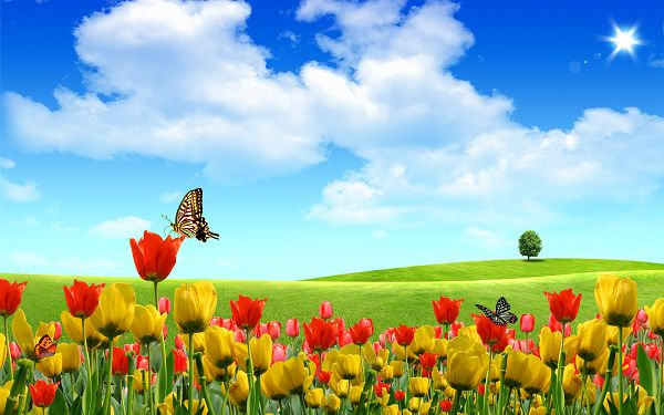 Free Scenery Wallpaper - Includes Beautiful Buds, Boasting of Its Natural Scene!
