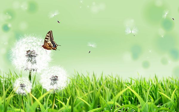 Free Scenery Wallpaper - Includes Dandelion and Butterfly, Doing Good to Protect the Eyes!,click to download
