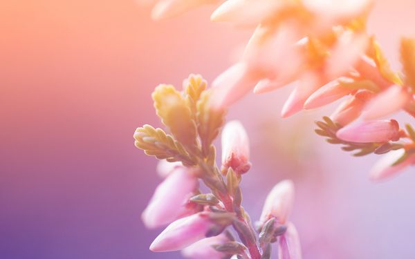 Free Scenery Wallpaper - Includes Morning Blossom, Make You See the Digital Desk More!