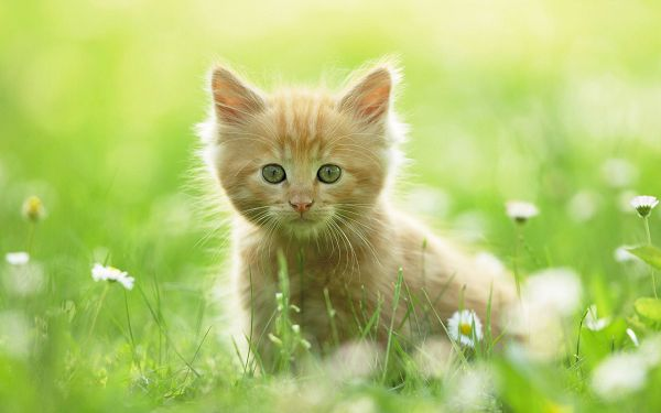 Free Scenery Wallpaper - Includes Such a Cute Kitten, Fit to be Used on Any Digital Device!