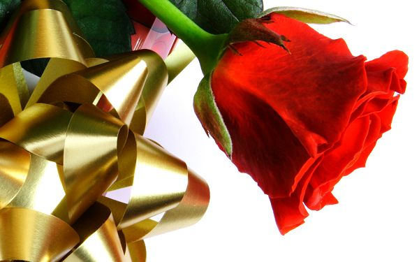 Free Scenery Wallpaper - Includes a Beautiful Red Rose, Fit For Anyone in Relationship!
