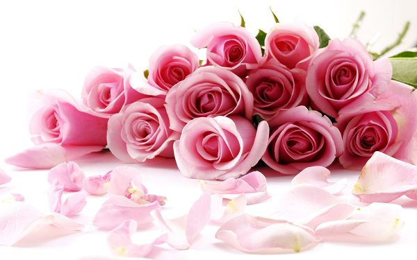 Free Scenery Wallpaper - Includes a Bundle of Pink Roses, Fit Anyone in a Relationship!