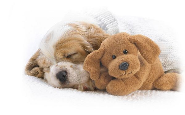 Free Scenery Wallpaper - Includes a Sleeping Dog and a Lovely Doll, Do They Look Alike?
