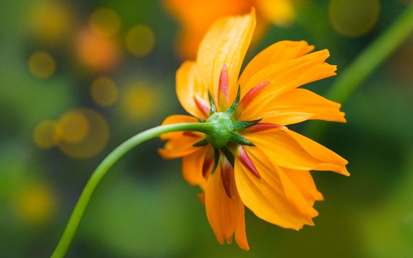Free Scenery Wallpaper - Includes an Orange Daisy, an Incredible Look!,click to download