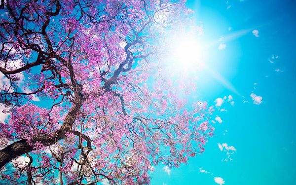 Free Scenery Wallpaper - Includes the Scene of Blooming Spring, Simply Good and Natural!