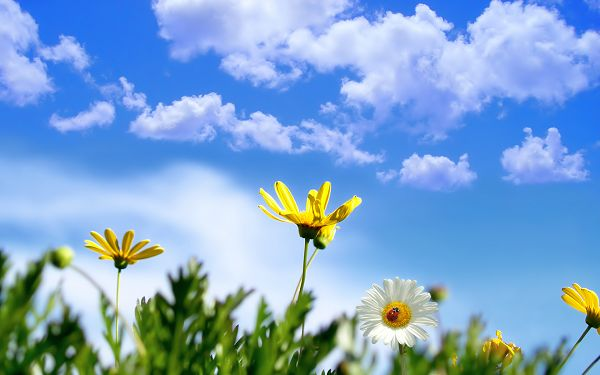 Free Scenery Wallpaper - Shows Sunny Springtime, Keep Spring All Around!,click to download