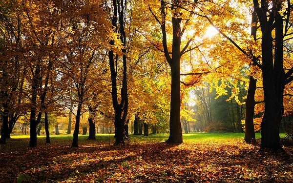 Free Scenery Wallpaper - Shows a Typical Autumn Scene, Bound to Look Amazing on the Device!