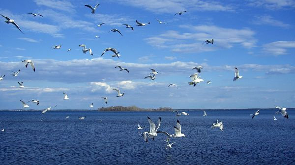 Free Scenery Wallpaper - Shows the Birds on the Sea, Will They Take a Rest on the Island?
