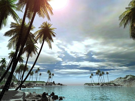 Free Scenery Wallpaper - Sunlight, Quiet River and Coconut Trees, Fit for All Users!