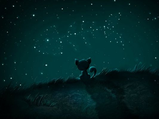 Free Wallpaper - Can Anyone Take the Lonely and Hungry Little Cat Home?