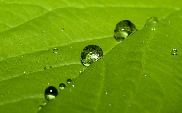 Free Wallpaper - Includes Such a Green Leaf, with Rainy Water as Decoration
