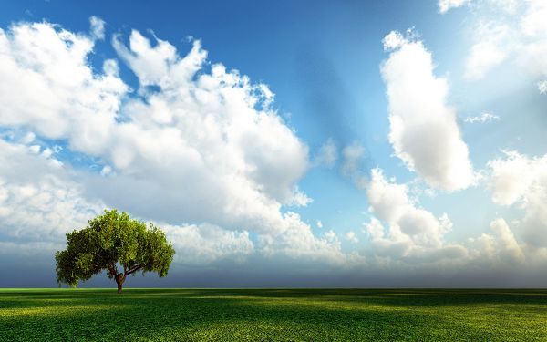 Free Wallpaper - Includes a Green Tree and a Field of Grass, Makes One Hopeful!,click to download