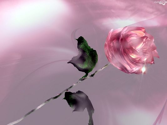 Free Wallpaper - Includes a Pink Rose in Full Bloom, Maybe a Diamond is Shinning!