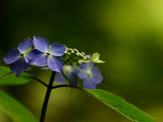 click to free download the wallpaper--Fresh Flower Pictures, Little Blue Flowers on Green Background