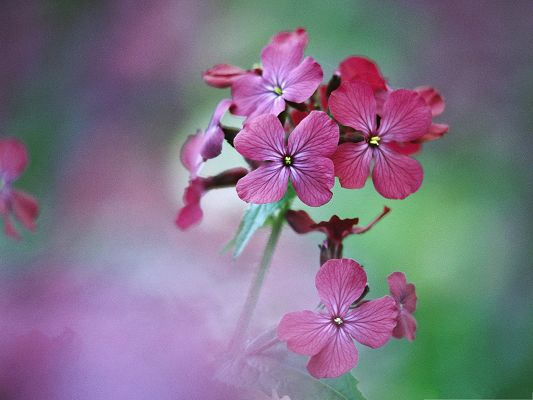 Fresh Flowers Image, Pink Flowers in Bloom, Put Against Green Background