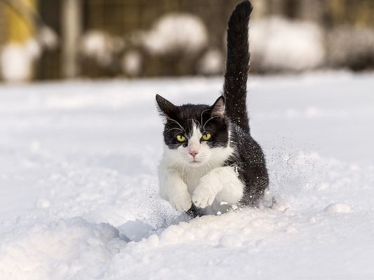 click to free download the wallpaper--Funny Cat Image, Kitten Playing in Thick Snow, Shall Attract Much Attention