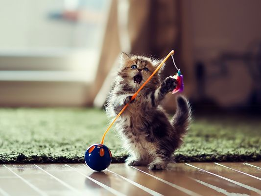 Funny Cat Photos, Cute Kitten Standing Up, What a Dancer!