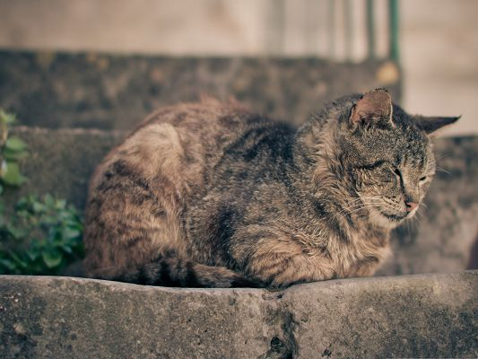 click to free download the wallpaper--Funny Cat Picture, Gray Cat Taking a Nap, Curled Up Body