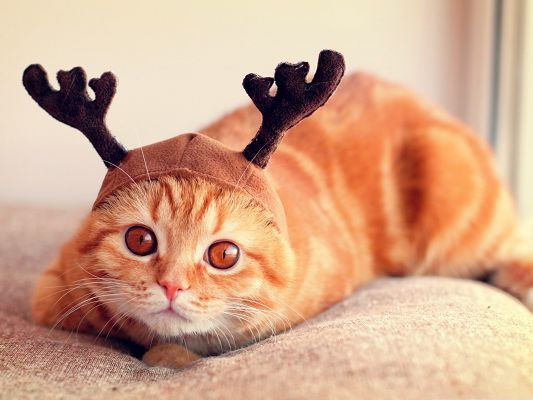 click to free download the wallpaper--Funny Cat Picture, Reindeer Kitten, Lovely Facial Expression