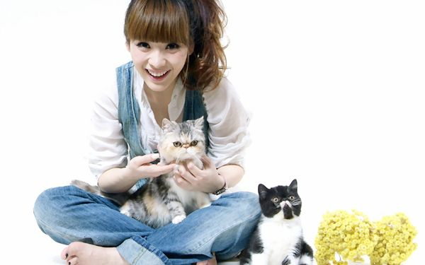 Girl with Her Pet Kitties, All of Them Are Happy Together, She is Indeed Good-Looking in Smile - HD Liu Yan Wallpaper