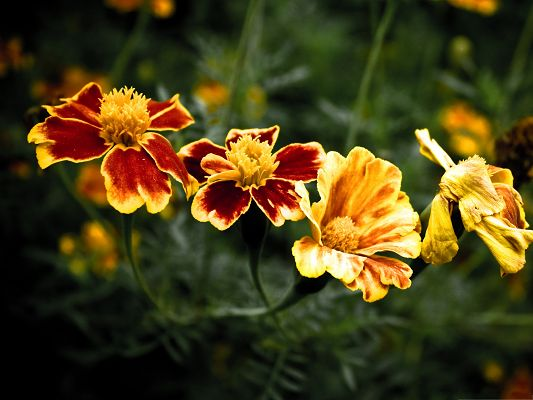 Golden Flowers Picture, a Line of Four Beautiful Flowers, Green Stem as Support