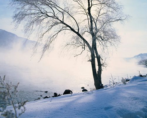 Great Landscape of Nature, a Snow-Capped Tree, Strong Wind, Snow Falling into the Lake