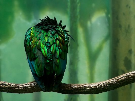 click to free download the wallpaper--Green Bird Photography, Beautiful Bird Turning Its Back Against the Screen
