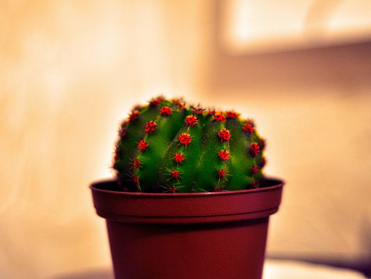 click to free download the wallpaper--Green Cactus Image, Beautiful Cactus in Basket, Indoor Flowers
