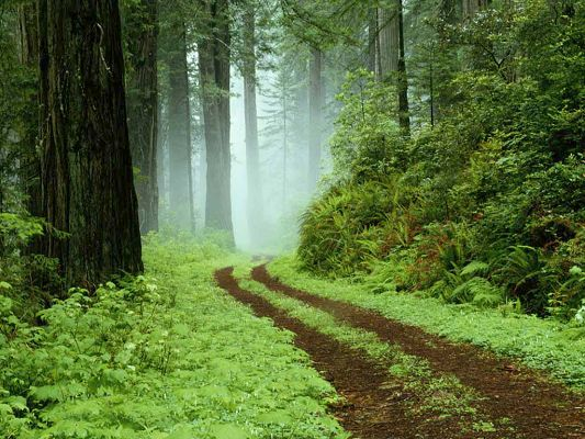 click to free download the wallpaper--Green Landscape of Nature, an Earthy and Narrow Road Among Green Scene, Looking Great
