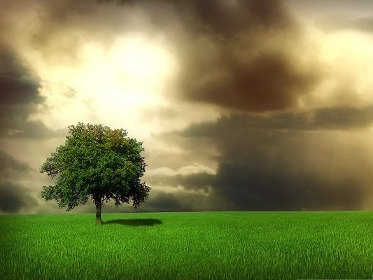 click to free download the wallpaper--Green Nature Landscape, Tall Tree and Green Grass, Great Spring Time