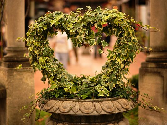 click to free download the wallpaper--Green Plant Photography, Heart-Shaped Plant, Romantic and Memorable Moment