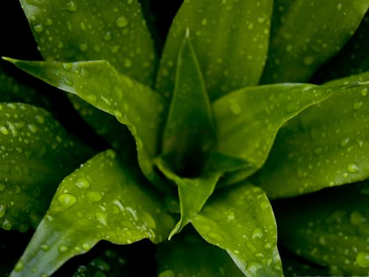 click to free download the wallpaper--Green Plant Picture, Rain Drops All Over the Green Leaves, Fresh New Scene