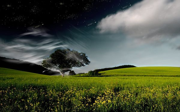 Green Trees and Grass Under the Touch of Gentle Wind, Things Are Quite Fine - Free Widescreen Natural Scenery Wallpaper