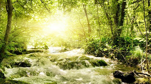 Green Trees and Plants, River is Also Painted Green, They Are Such Good Fits, Sunlight is Pouring in - Natural Scenery Wallpaper